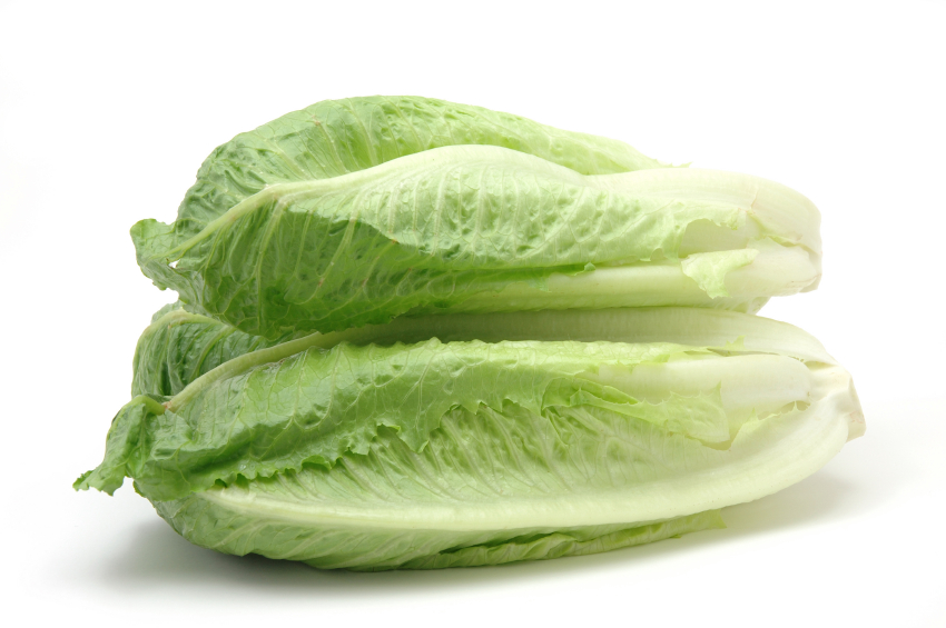 "Lettuce ""Roman"""